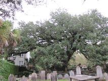 Chwalebnie stary drzewo pomaga cienić starego cmentarz i osłaniać Obraz Royalty Free