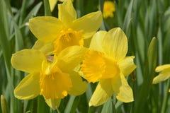 Chwalebnie wiosna tercet Zdjęcia Stock