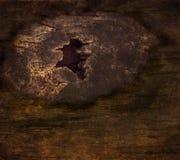 Chwyt korowata kępka na drzewnej teksturze zdjęcie royalty free