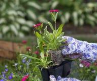 Chwytać kwiat zasadzać Fotografia Stock