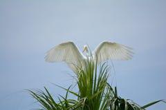 chwytający wiatr Fotografia Royalty Free