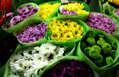 chysanthemum销售额 免版税库存照片