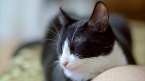 Chytry kot z pełnym setem emocje zbiory wideo