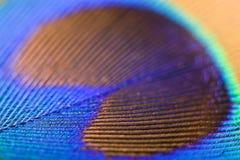 Ciérrese encima apagado de la pluma de un pavo real Imagenes de archivo