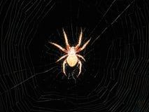 Ciérrese encima de araña en el web Fotos de archivo libres de regalías