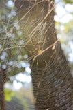 Ciérrese encima de araña en el web Fotos de archivo