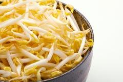 Ciérrese encima de beansprout en el fondo blanco Foto de archivo libre de regalías