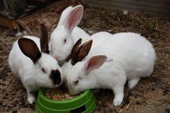 Ciérrese encima de conejo del hocico Fotografía de archivo libre de regalías