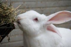 Ciérrese encima de conejo del hocico Imagen de archivo