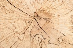 Ciérrese encima de corte redondo del tocón de árbol de haya con los anillos en la opinión superior de la forma blanca del fondo imagen de archivo