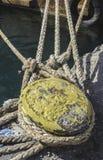 Ciérrese encima de cuerdas Fotografía de archivo libre de regalías