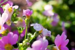 Ciérrese encima de descensos del agua en la flor rosada imagen de archivo libre de regalías