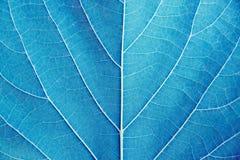 Ciérrese encima de estilo azul del filtro del tono del detalle de la hoja Fotos de archivo libres de regalías