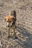 Ciérrese encima de fangoso, y moje el perro Imagenes de archivo