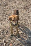 Ciérrese encima de fangoso, y moje el perro Fotografía de archivo