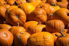 Ciérrese encima de foco agudo en las calabazas en el frente de una pila masiva de calabazas para Halloween Foto de archivo