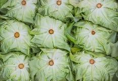 Ciérrese encima de fondo orgánico verde de la lechuga Foto de archivo libre de regalías