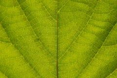 Ciérrese encima de fondo verde de la textura del extracto del detalle de la hoja Imagenes de archivo