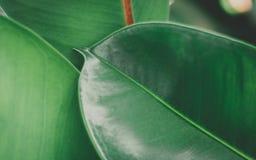 Ciérrese encima de fondo verde de las hojas Fotos de archivo libres de regalías