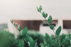 Ciérrese encima de fondo verde de las hojas Foto de archivo libre de regalías