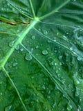 Ciérrese encima de fondo verde de la hoja con descenso del agua Foto de archivo libre de regalías