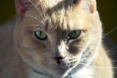Ciérrese encima de gato Fotos de archivo libres de regalías
