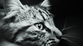 Ciérrese encima de gato Foto de archivo