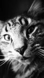 Ciérrese encima de gato Imágenes de archivo libres de regalías