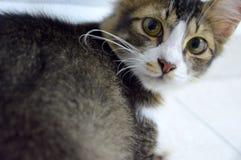 ciérrese encima de gatos Fotos de archivo libres de regalías