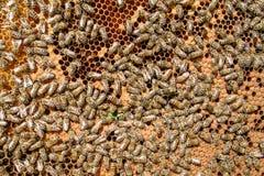 Ciérrese encima de granja de la abeja Imagenes de archivo
