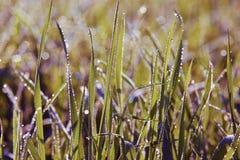 Ciérrese encima de hierba con descensos del agua Imágenes de archivo libres de regalías