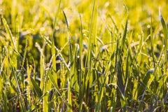 Ciérrese encima de hierba con descensos del agua Fotos de archivo