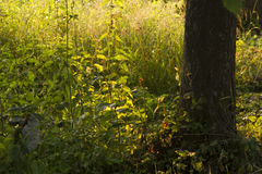 Ciérrese encima de hierba verde en sunrice Foto de archivo libre de regalías