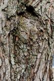 Ciérrese encima de imagen de la corteza de árbol anudada Imagenes de archivo