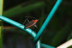 Ciérrese encima de insecto Foto de archivo libre de regalías