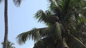 Ciérrese encima de 4k tirado de los pájaros salvajes de la naturaleza que se sientan en las palmeras en la isla del bosque de la  metrajes