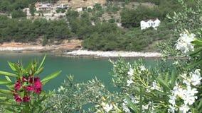 Ciérrese encima de línea de la costa detrás de las flores en Thassos Grecia almacen de metraje de vídeo