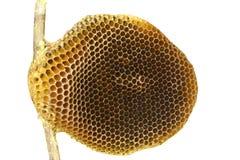 Ciérrese encima de la abeja y de la miel, panal Imagen de archivo libre de regalías