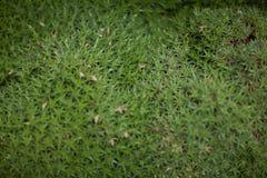 Ciérrese encima de la almohada de una planta de la bromelia, cactus, hojas del verde Imagen de archivo