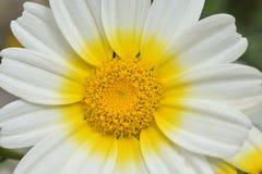 Ciérrese encima de la cabeza de flor Imágenes de archivo libres de regalías