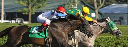 Ciérrese encima de la carrera de caballos fotos de archivo
