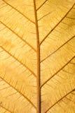 Ciérrese encima de la estructura de la textura seca de la hoja de Grunge Fotografía de archivo