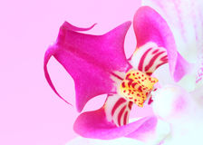 Ciérrese encima de la flor Imagenes de archivo