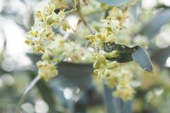 Ciérrese encima de la flor Imagen de archivo