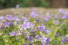 Ciérrese encima de la flor Fotografía de archivo libre de regalías