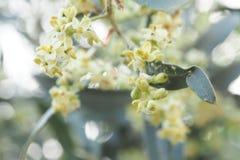 Ciérrese encima de la flor Fotografía de archivo
