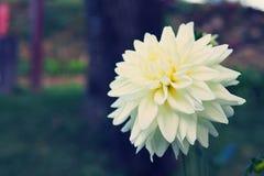 Ciérrese encima de la flor blanca imagen de archivo libre de regalías