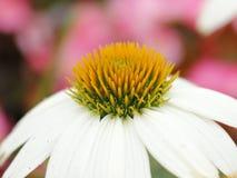 Ciérrese encima de la flor blanca Imagen de archivo