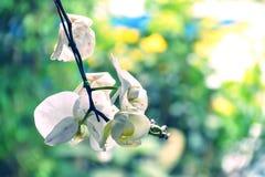 Ciérrese encima de la flor blanca de la orquídea Fotografía de archivo libre de regalías