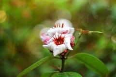 Ciérrese encima de la flor blanca en jardín Fotografía de archivo